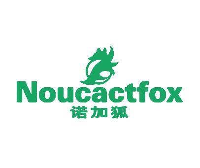 诺加狐-NOUCACTFOX