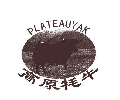 高原牦牛-PLATEAUYAK