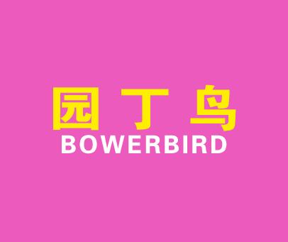 园丁鸟-BOWERBIRD