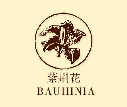 紫荆花-BAUHINIA