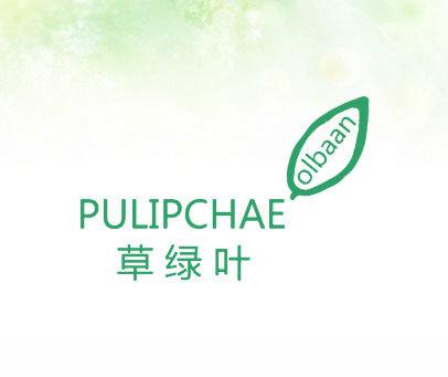 草绿叶-PULIPCHAE OLBAAN