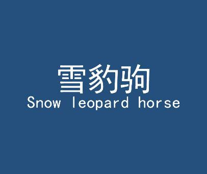 雪豹驹-SNOW-LEOPARD-HORSE