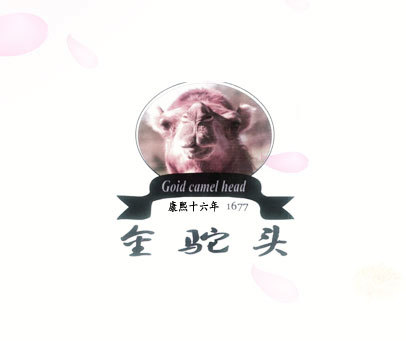 金驼头 康熙十六年-GOID CAMEL HEAD 1677