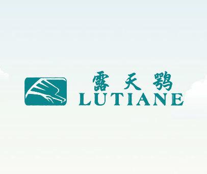 露天鹗loutiane