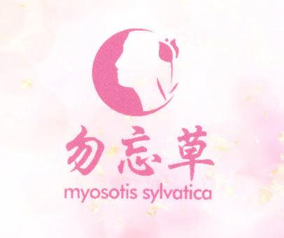 勿忘草 MYOSOTIS SYLVATICA