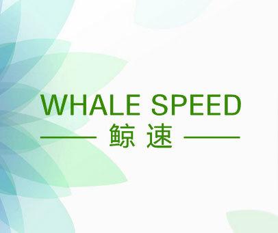 鲸速 WHALE SPEED