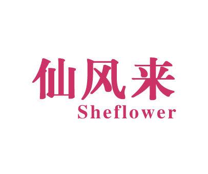 仙风来-SHEFLOWER
